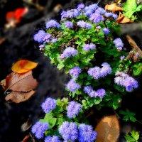 Осенние цветочки. :: Ирина