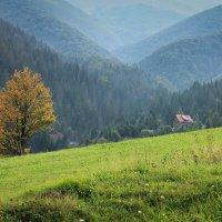 в горах :: Елена Мизенко