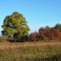 красит осень листву :: Александр С.