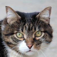 Восьмимартовский кот... или кошка :: Dr. Olver  ( ОлегЪ )