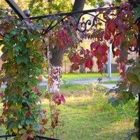 Осень в Красном селе. :: Геннадий Александрович