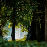Сквозь старый парк. :: Андрей Якимюк