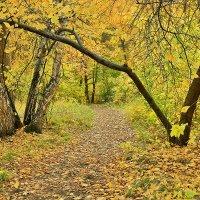 Тропинка в осень :: Алексей Белик