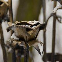 Зимние цветы :: Владимир Ракитин