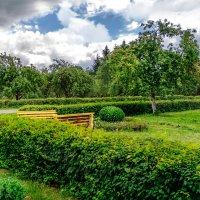 Яблочный сад :: Анатолий Клепешнёв