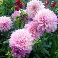цветы :: Вадим Нечаев