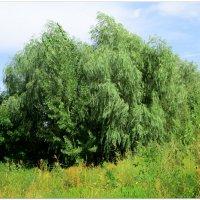 Природа на Дону... :: Тамара (st.tamara)