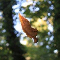 Осень, листья полетели :: Gennadiy Karasev