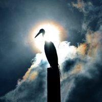 Ваша Светлость... :: Александр Бойко