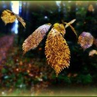 Осенний гербарий-) :: Любовь Чунарёва