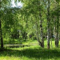 Весенние солнце :: Лидия (naum.lidiya)