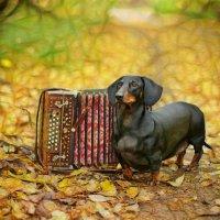 Осенние частушки :: Альберт Ханбиков