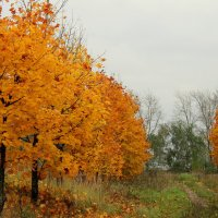 Рыжая осень. :: Маргарита ( Марта ) Дрожжина
