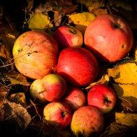 Яблочки :: Алёна Мартынцова