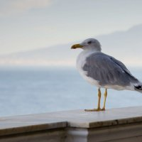 ...птичка на фоне Везувия.. :: Александр Беляков