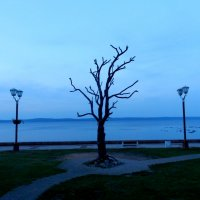 Дерево желаний. Скульптура на набережной Петрозаводска. :: Наталья Левина