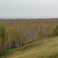 Дождливый горизонт :: Виктор Четошников