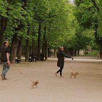 Прогулка по Люксембургксому парку :: ИРЭН@ .