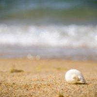 домик на пляже. :: Евгений Статников