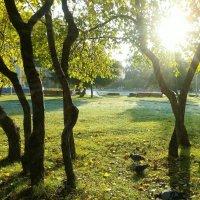 Лучи утреннего солнца в сентябре :: fotovichka репортажный фотохудожник