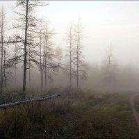 Утренний туман :: Любовь Потеряхина