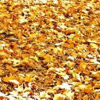кленовые листья :: Вадим Виловатый