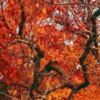 Осеннее :: Lady Etoile