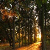 золотая осень :: евгений Смоленцев
