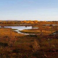 Осень золотая :: Роман Маркин