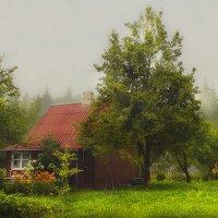 Летний туман.... :: Елена Kазак
