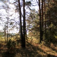 В осеннем лесу :: Татьяна Нижаде