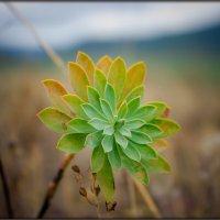 каменный цветок :: Sergey Bagach
