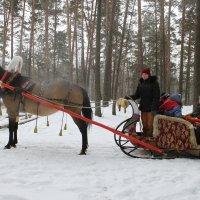 Катание на санях :: Олег Романенко