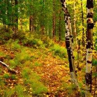 в лесу. :: Лариса Красноперова