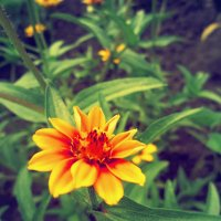 Цветок :: Виктория Дорохова