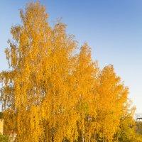 Осень :: Алексей. Бордовский
