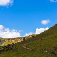 Коровы на горном пастбище :: Николай Николенко