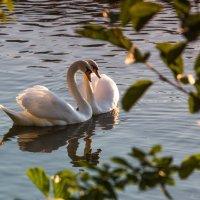 Ты со мной, любимая... :: Ирина Терентьева