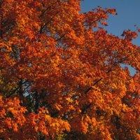 Огненная листва :: Павел Зюзин