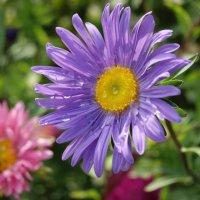 цветы на даче :: Наталья