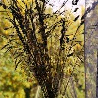 Осень на моём окне :: Татьяна Дмитриева