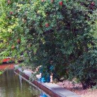 В Райском саду :: Наталья Джикидзе (Берёзина)