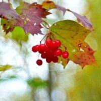 Краски сентября... #2 :: Андрей Вестмит
