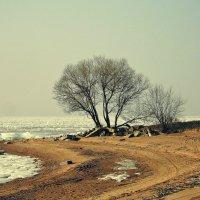 Моё дерево вдохновения! :: Полина