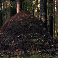 дом для муравьёв :: Татьяна