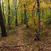 Похоже, золотая осень IMG_1290 :: Андрей Лукьянов