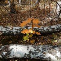 Старый лес :: Валентина Пирогова