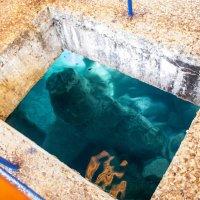 аквариум :: Сергей Леонтьев