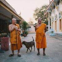 Александра Сироткина - Monks :: Фотоконкурс Epson