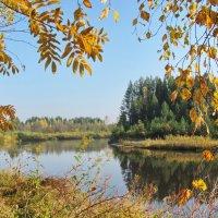 Рыжая осень :: Yuriy Kuzmič
